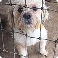 Adopt A Pet :: Bebe - Quinlan, TX