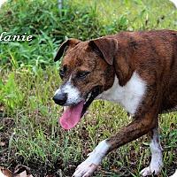 Adopt A Pet :: Melanie - Texarkana, AR