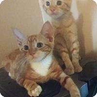 Adopt A Pet :: Buster - Philadelphia, PA