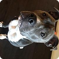 Adopt A Pet :: Pluto- Courtesy listing - Fredericksburg, VA