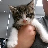 Adopt A Pet :: Bliss - Paducah, KY
