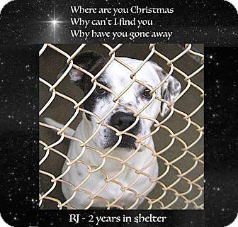 Bulldog/American Bulldog Mix Dog for adoption in Sautee, Georgia - RJ