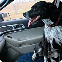 Adopt A Pet :: Barley - Petersburg, VA