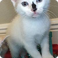 Adopt A Pet :: Elsa - Tampa, FL