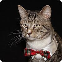 Adopt A Pet :: White Nose (Neutered)-New Pics - Marietta, OH