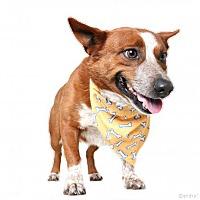 Adopt A Pet :: Roscoe D170313 - Edina, MN