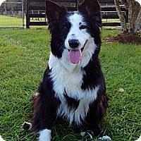 Adopt A Pet :: Maggie - Sarasota, FL