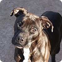 Adopt A Pet :: Nassor - Courtesy - Dallas, GA