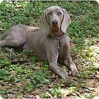 Adopt A Pet :: Luna  **ADOPTED** - Eustis, FL
