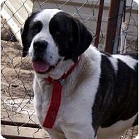 Adopt A Pet :: Sadie - Glenpool, OK