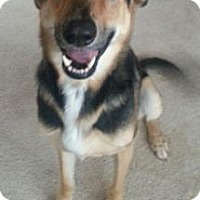 Adopt A Pet :: *Harley - Winder, GA
