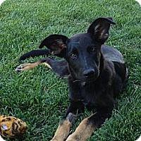 Adopt A Pet :: JAX - Torrance, CA