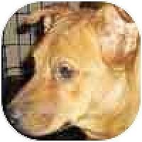 Adopt A Pet :: Sedona - Mesa, AZ