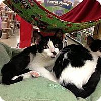 Adopt A Pet :: Sarena - Monroe, GA