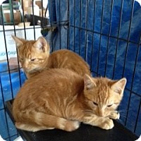 Adopt A Pet :: Marmaduke - Ft. Lauderdale, FL