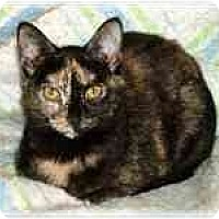 Adopt A Pet :: Bumper - Proctor, MN