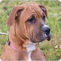 Adopt A Pet :: Isabella - Rigaud, QC