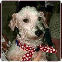 Adopt A Pet :: Guidry - Kingwood, TX