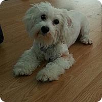 Adopt A Pet :: Memphis - Russellville, KY