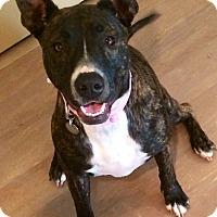 Adopt A Pet :: Hayden - Surprise, AZ