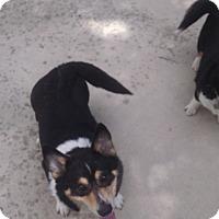 Adopt A Pet :: Brianna - Simi Valley, CA