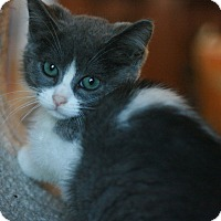 Adopt A Pet :: Charmaine - Canoga Park, CA