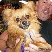 Adopt A Pet :: Koby - Memphis, TN