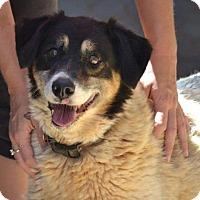 Adopt A Pet :: Ethel - Bradenton, FL