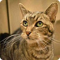 Adopt A Pet :: JASMINE - Martinez, CA