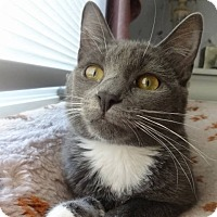 Adopt A Pet :: Lizzie -Adoption Pending! - Colmar, PA