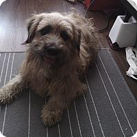Adopt A Pet :: Reisling - Encino, CA