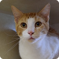 Adopt A Pet :: Catfish Hunter - Bucyrus, OH