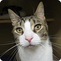 Adopt A Pet :: Obie - Menands, NY