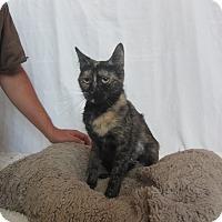 Adopt A Pet :: Jane - Ridgway, CO
