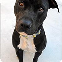 Adopt A Pet :: Mila - Monterey, CA
