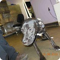 Adopt A Pet :: EMILY - Panama City, FL