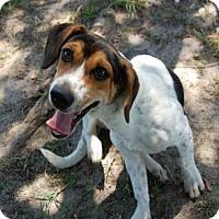 Adopt A Pet :: TALLY - Panama City, FL
