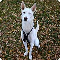 Adopt A Pet :: SPIRIT - West Valley, UT