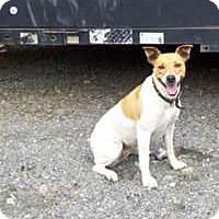 Adopt A Pet :: URGENT needs home now - Sacramento, CA