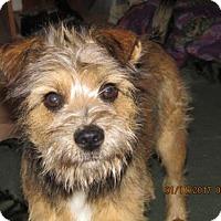 Adopt A Pet :: Skipper - Rutledge, TN