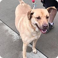 Adopt A Pet :: Kix - Shinnston, WV