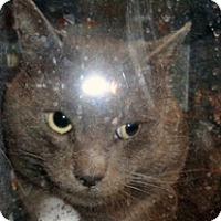Adopt A Pet :: 329214 - Wildomar, CA