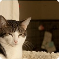 Adopt A Pet :: Lorena - Milwaukee, WI
