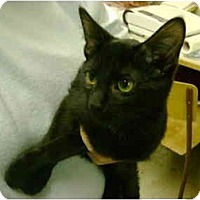 Adopt A Pet :: Spooky - Mission, BC