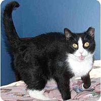 Adopt A Pet :: Graham - Colmar, PA