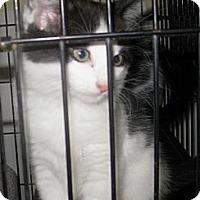 Adopt A Pet :: Three sisters - Dallas, TX