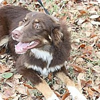 Adopt A Pet :: Rowdy - Conway, AR