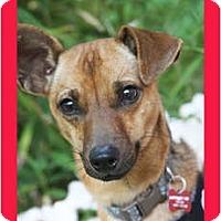 Adopt A Pet :: PaPpY - san diego, CA
