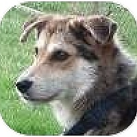 Adopt A Pet :: Shae - Hamilton, ON