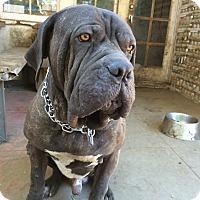 Adopt A Pet :: Slauson - Van Nuys, CA